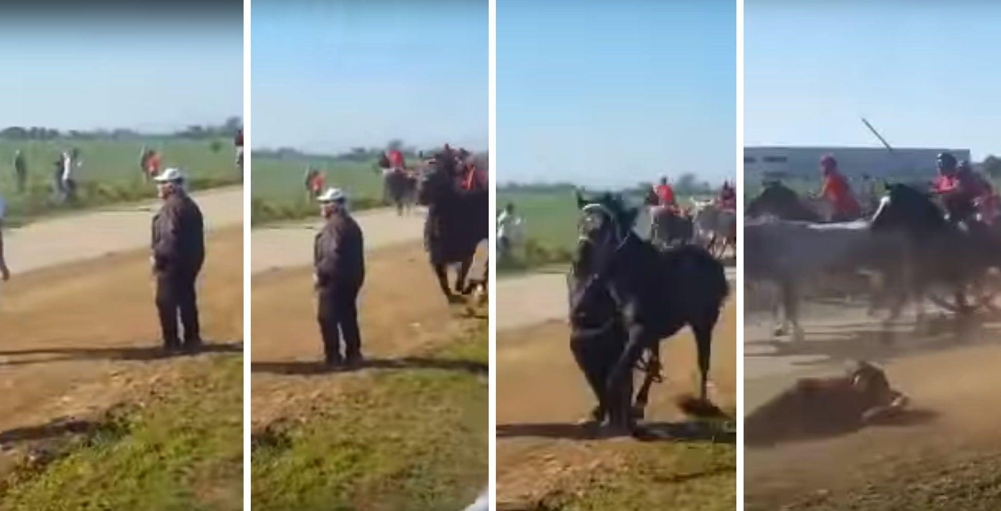 """Tragedia alla """"Cavalcata dei buoi"""" di Chieuti, cavallo travolge e uccide uno spettatore"""
