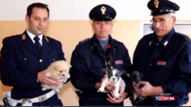 Udine Scoperto Traffico Di Cani Dalla Slovacchia 49 Cuccioli In