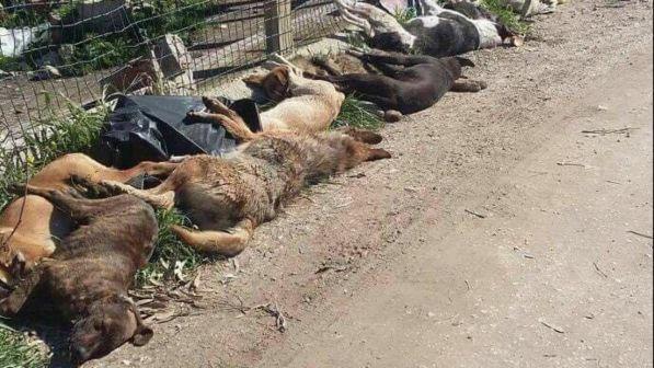 Cani avvelenati nell'Agrigentino, Micciché: ora istituire commissione