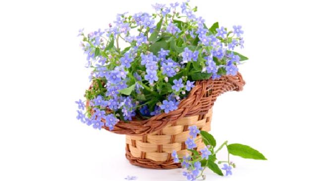 fiori da terrazzo autunnali