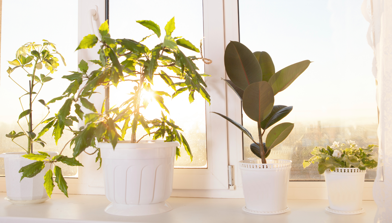 Le piante che purificano l 39 aria in casa tgcom24 for Piante in casa