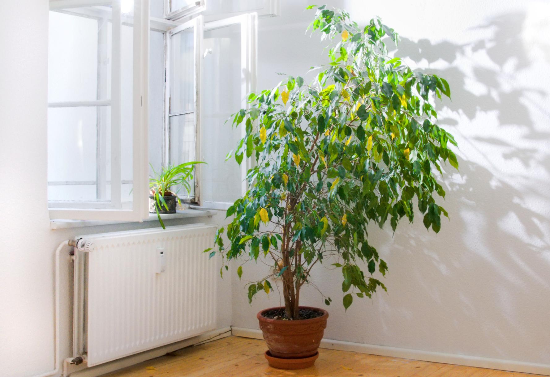 Quattro piante d 39 appartamento che depurano l 39 aria tgcom24 - Piante verdi interno ...