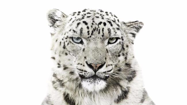 Wwf le specie animali in via d 39 estinzione protagoniste for Consulente d arredo cosa fa
