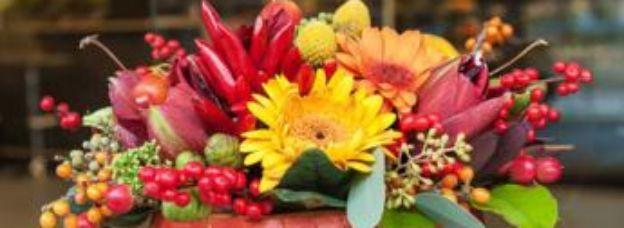 Primavera tra fiori e piante