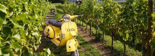 Cinque vini entusiasmanti