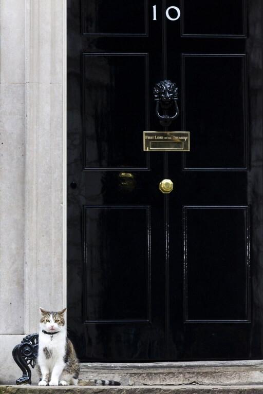 Larry, il  cacciatore di topi  di Downing Street