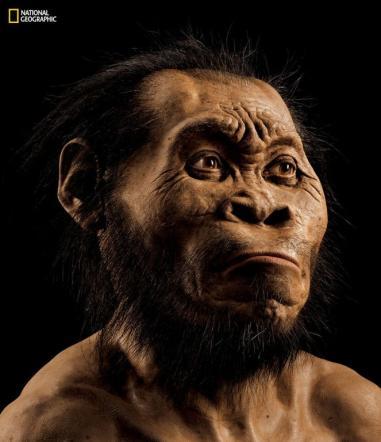 I misteri dell'Homo Naledi: domande e nuovi scenari dopo il ritrovamento