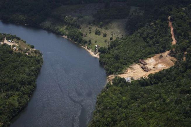 Disboscamento illegale, una piaga per la Terra: abbattuti 13 milioni di alberi all'anno