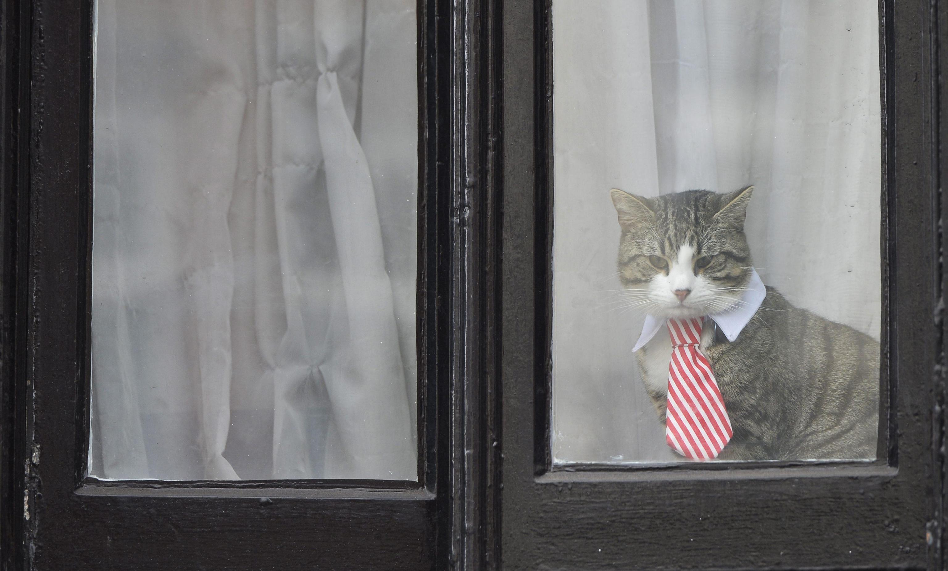 Assange Interrogato A Londra Il Suo Gatto In Cravatta Fa