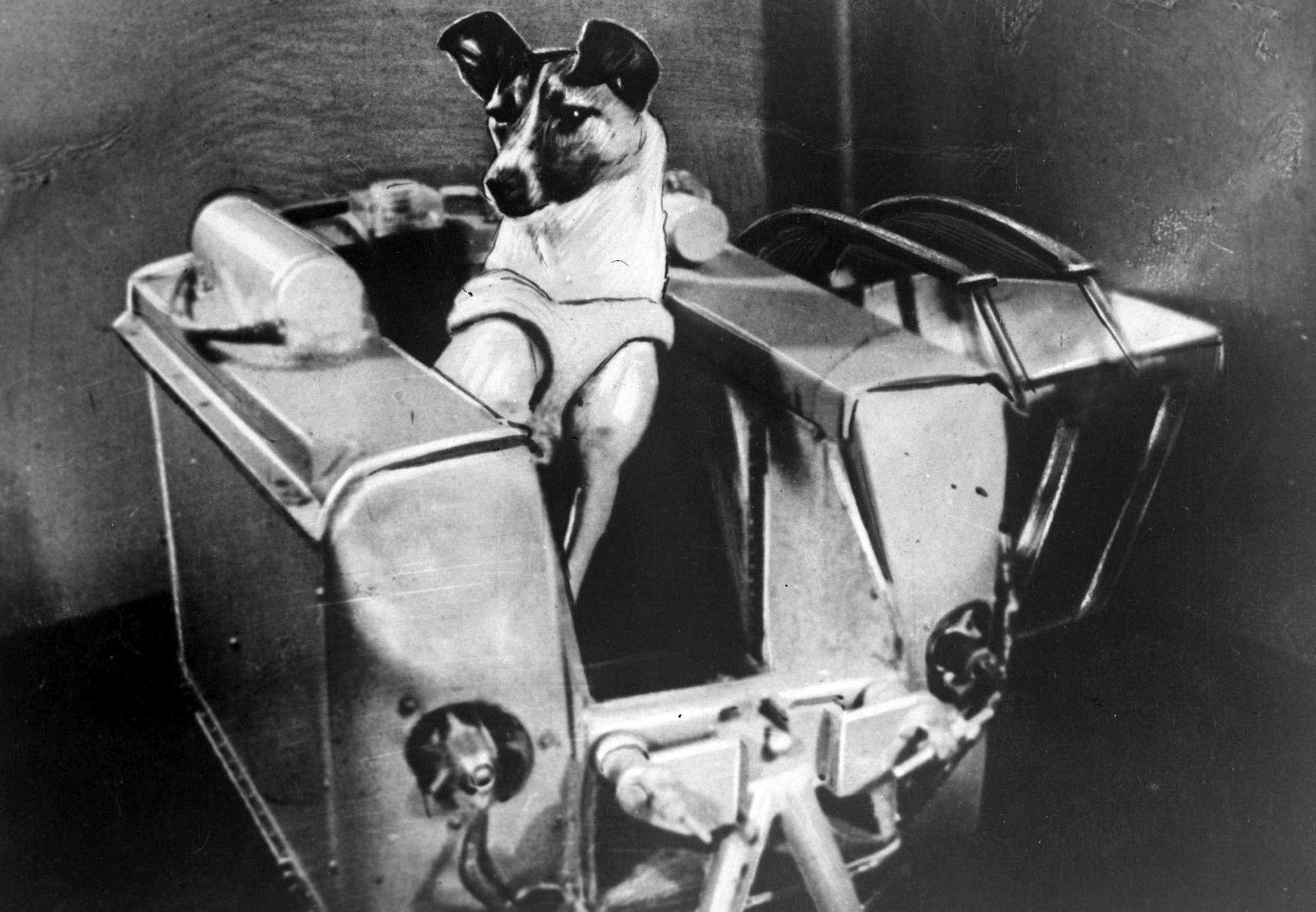 Spazio, 60 anni fa la cagnetta Laika veniva lanciata in orbita