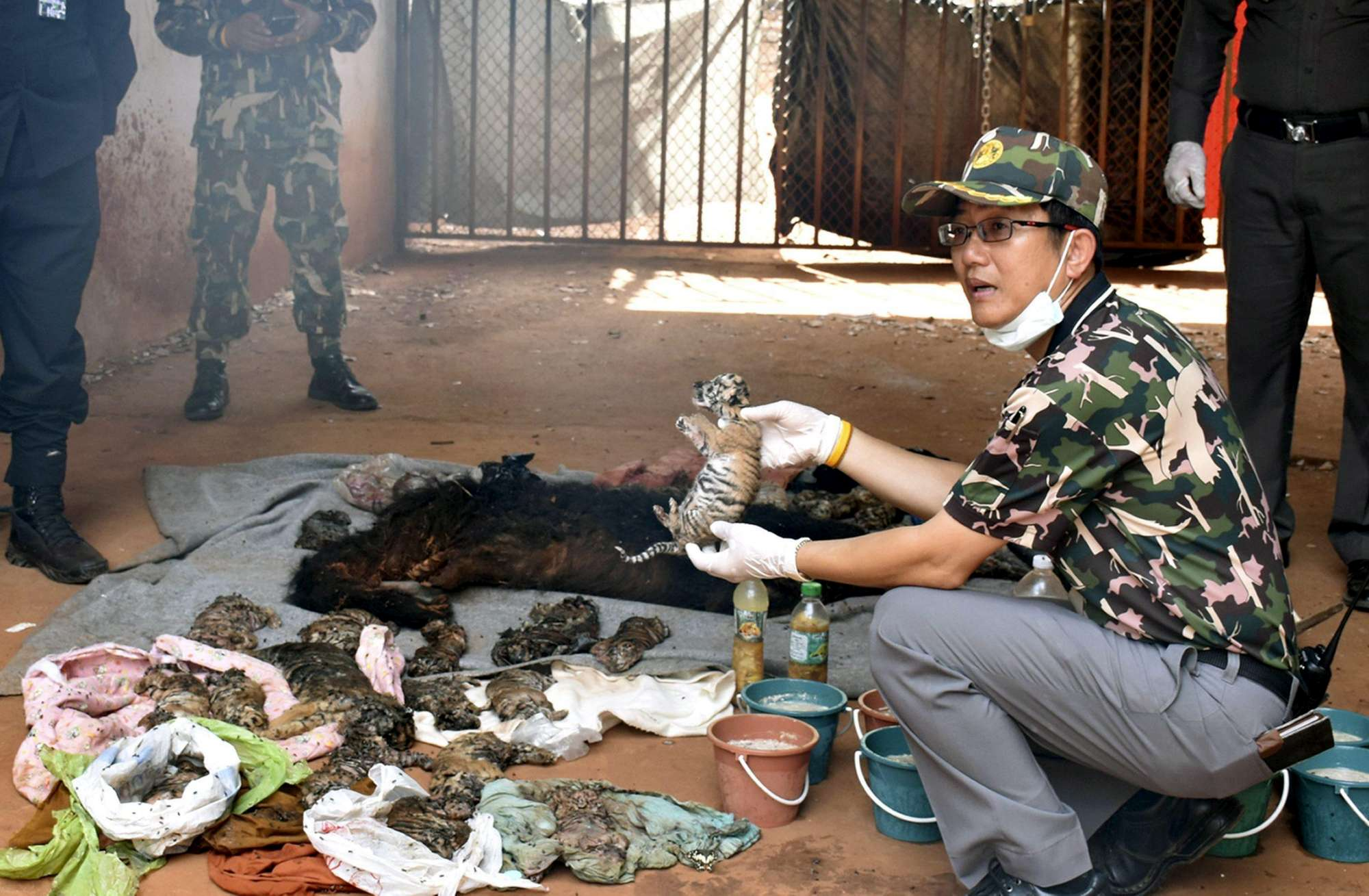 40 cuccioli di tigre sono stati trovati morti in un tempio thailandese