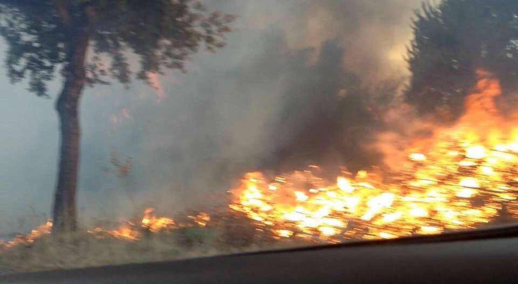 Brucia di nuovo la pineta di Castel Fusano: traffico in tilt