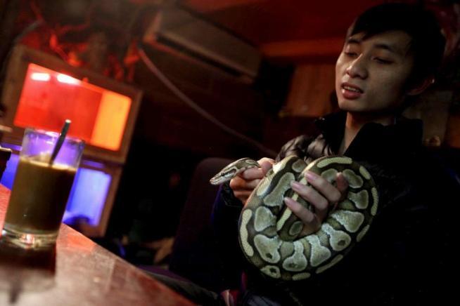 Un Petcafè nel centro di HanoiRelax al bar ma con gli animali