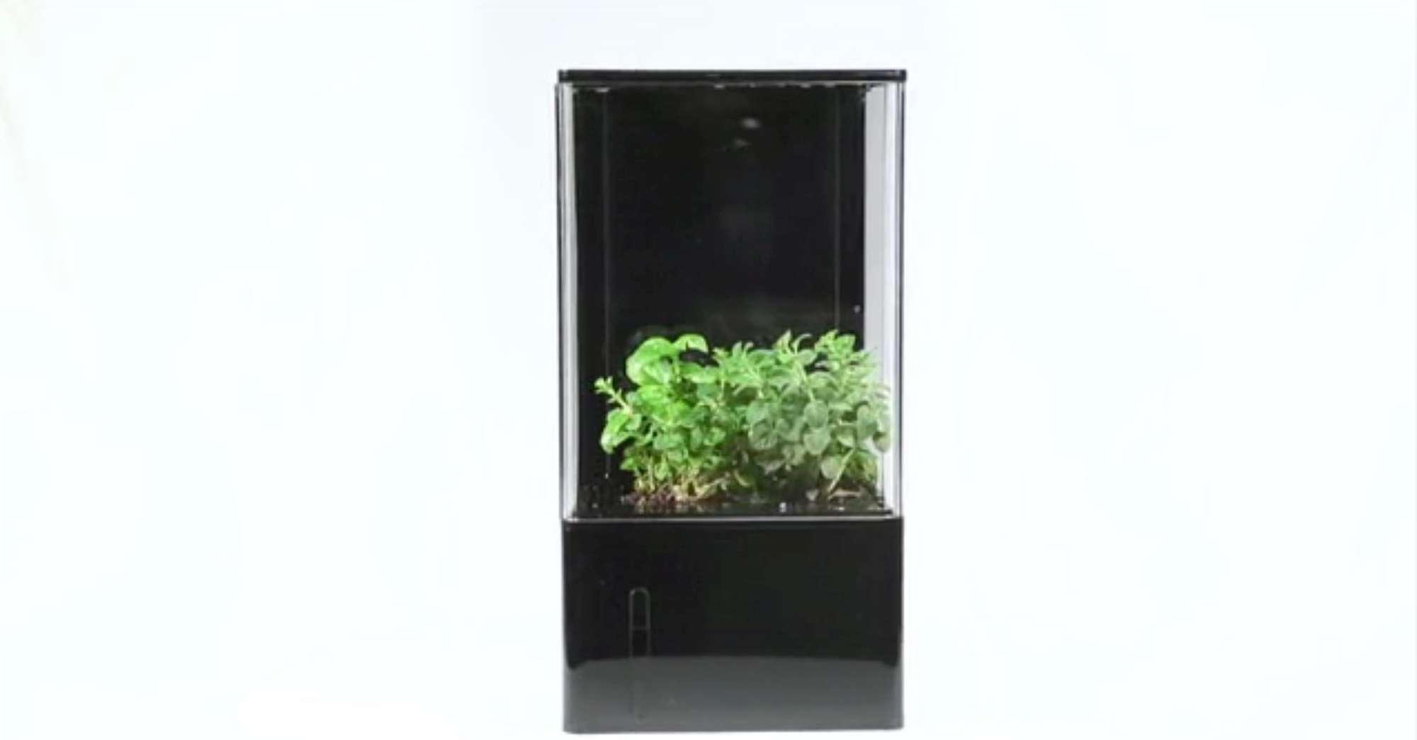 Una mini serra idroponica da scrivania per purificare l - Mini serra da interno ...