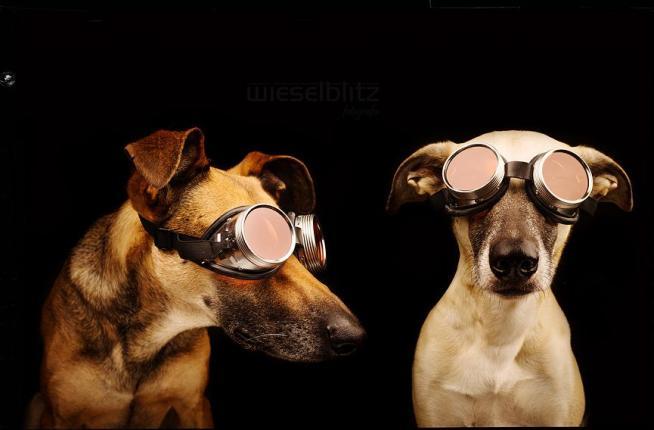 Ritratti di cani come vere star da copertina