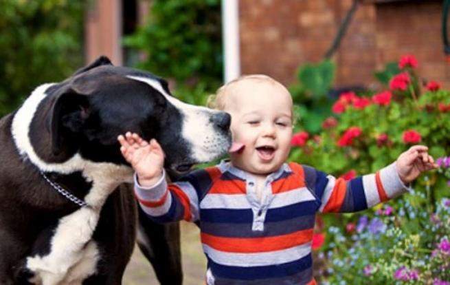 Quando Fido è il migliore amico dei bambini: giochi e tenerezze dal web