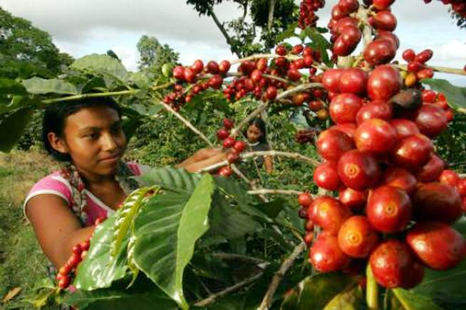 Tour del caffè per gustare il Centroamerica