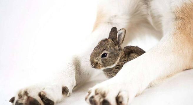 """Se il """"mammo"""" dei conigli è... un cane"""