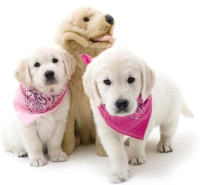 """""""National Puppy Day"""", la giornata dedicata ai piccoli amici a quattro zampe"""