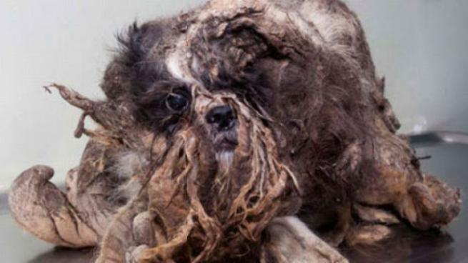 """Canada, la trasformazione del cane """"spazzatura"""": da clochard a cucciolotto"""