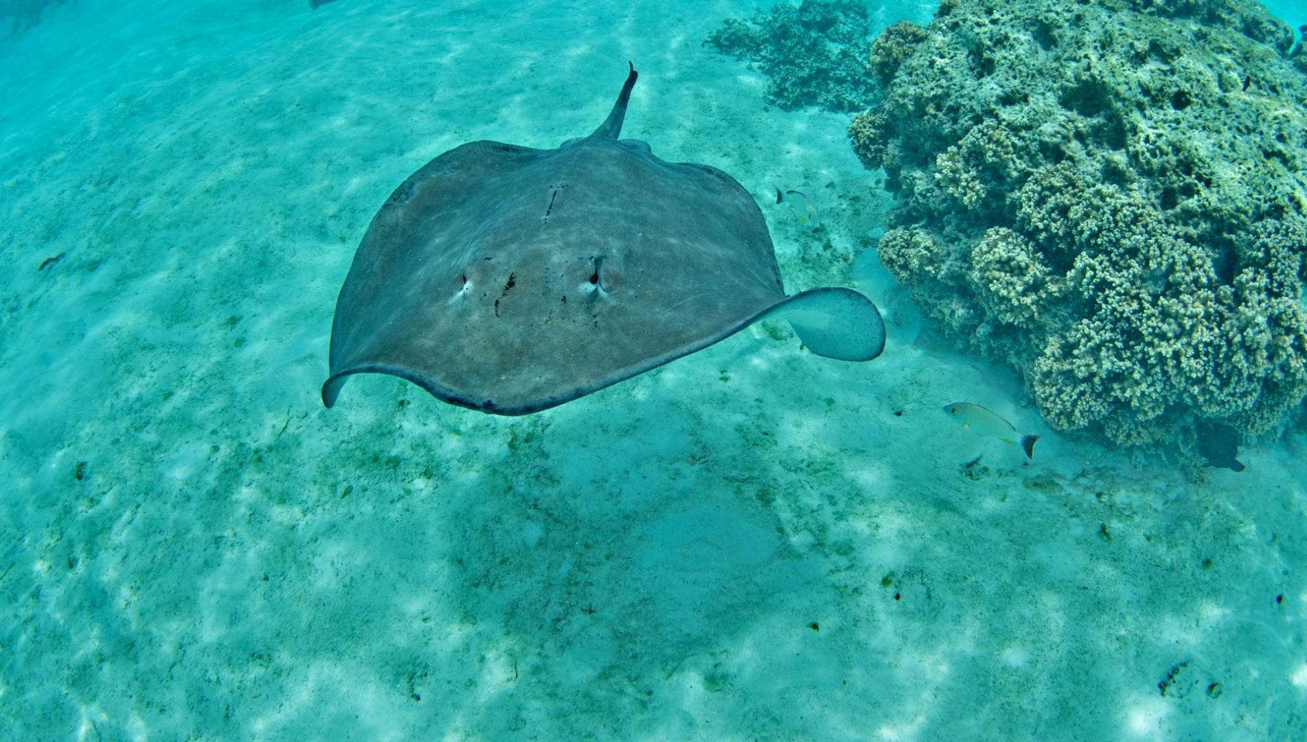 Donnavventura: gli arcipelaghi della Polinesia Francese