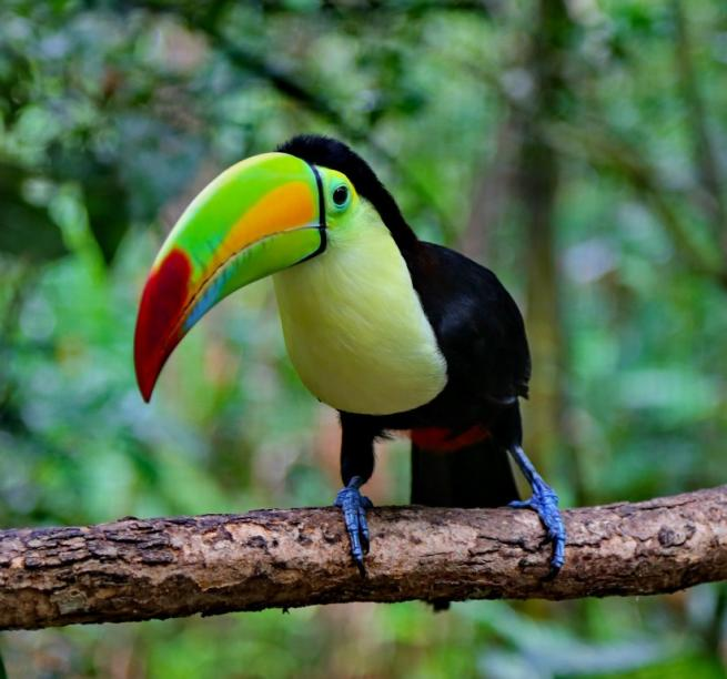 Donnavventura: dal Belize al Guatemala