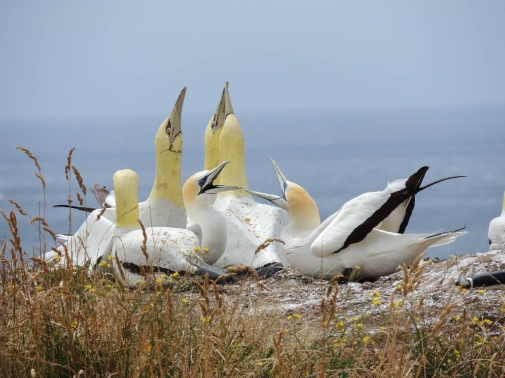 Addio Nigel, l uccello marino più solitario del mondo