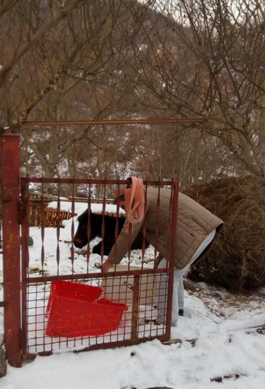 Terremoto nel Centro Italia, salvato in extremis cavallo immerso nella neve