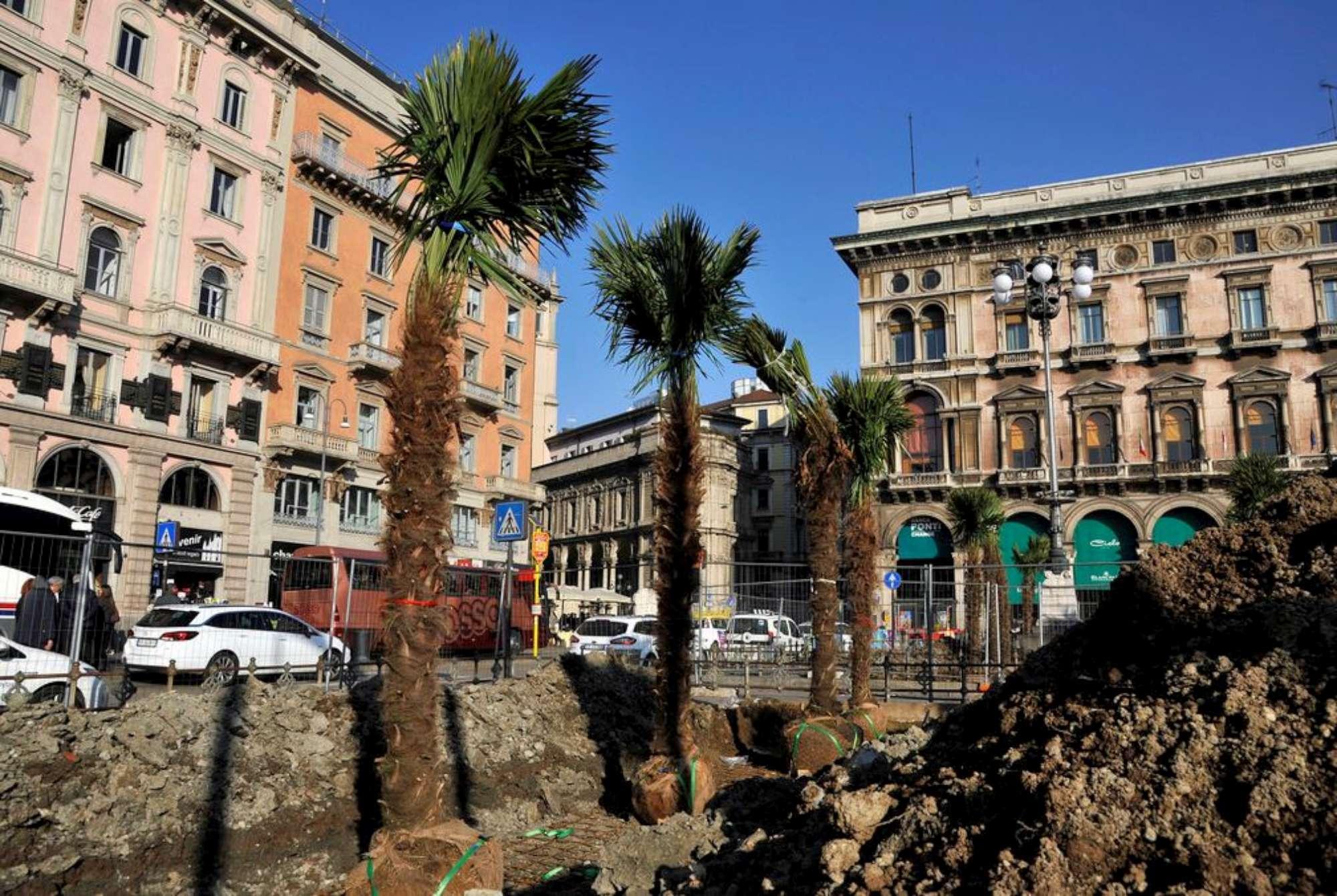 Palme in piazza Duomo a Milano, la città si rifà il look nel segno del  verde perenne