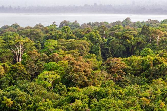 """Il """"paradosso"""" della deforestazione: gli alberi cadono, ma la Terra è più verde"""