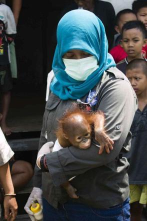 Borneo, salva la piccola Asoka orfana nella giungla indonesiana