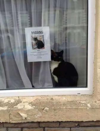 Missing cat: il micio scomparso ritrovato proprio accanto alla foto che lo ritrae
