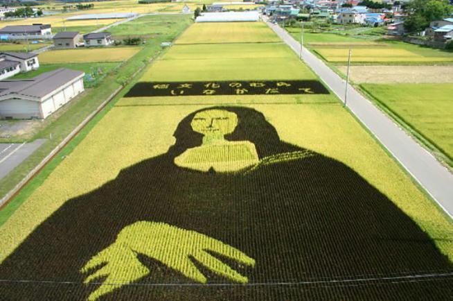 Giappone, le risaie diventano opere d'arte