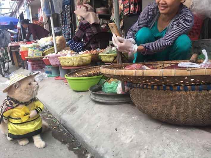 Vietnam, il gatto che vende pesce al mercato diventa una star del web