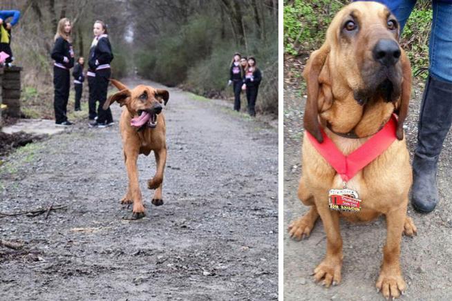 Usa, cane corre per sbaglio mezza maratona e si piazza al settimo posto