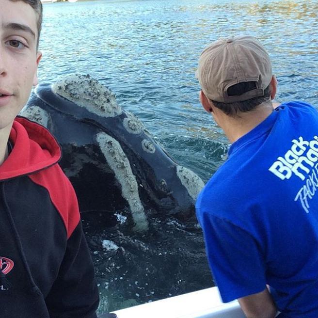 La balena ha una busta di plastica in bocca e chiede aiuto: poi ringrazia con la pinna