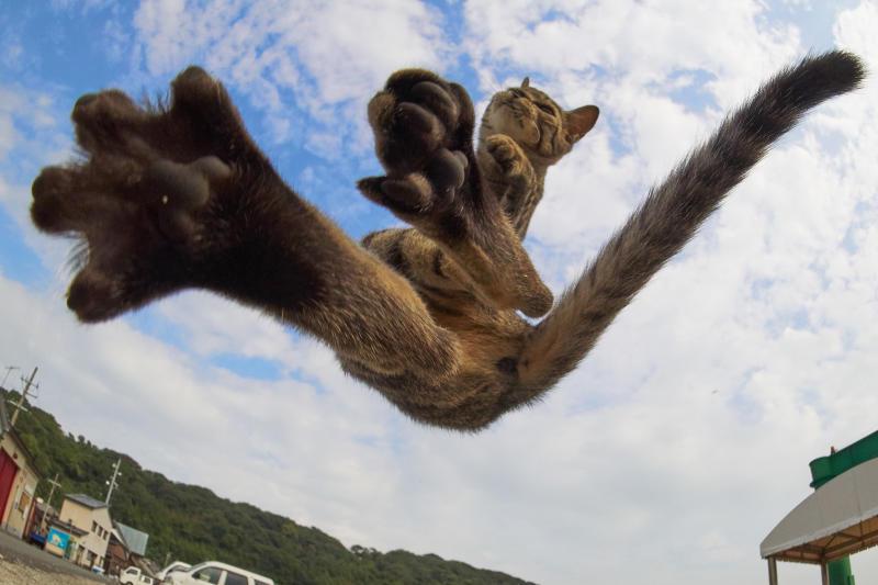 Kung Fu Gatto , le acrobazie volanti dei nostri amici a 4 zampe