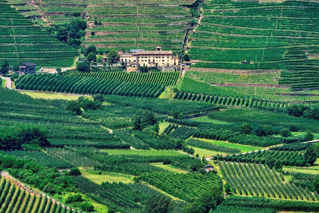 Luoghi di… vini: dove la vendemmia diventa eroica - Tgcom24