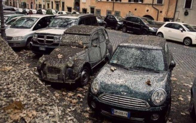 Roma, torna l'emergenza guano: sabato chiuso per 9 ore il Lungotevere