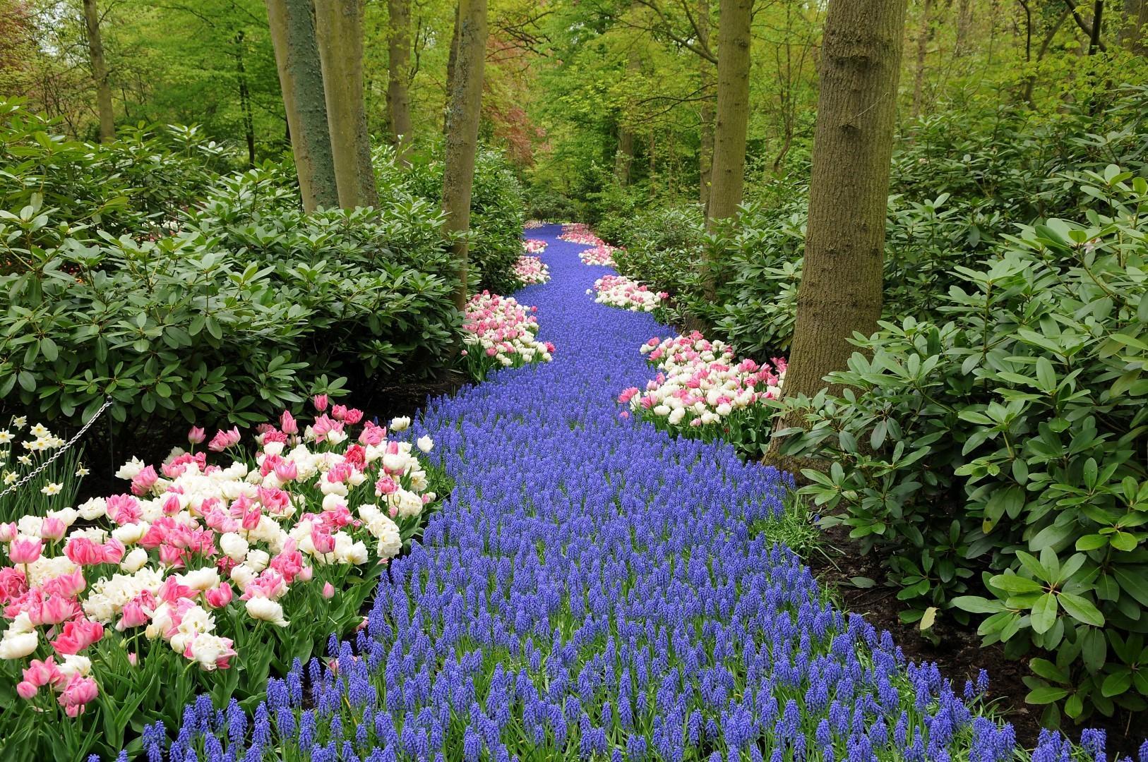 Olanda: la primavera trionfa al parco Keukenhof