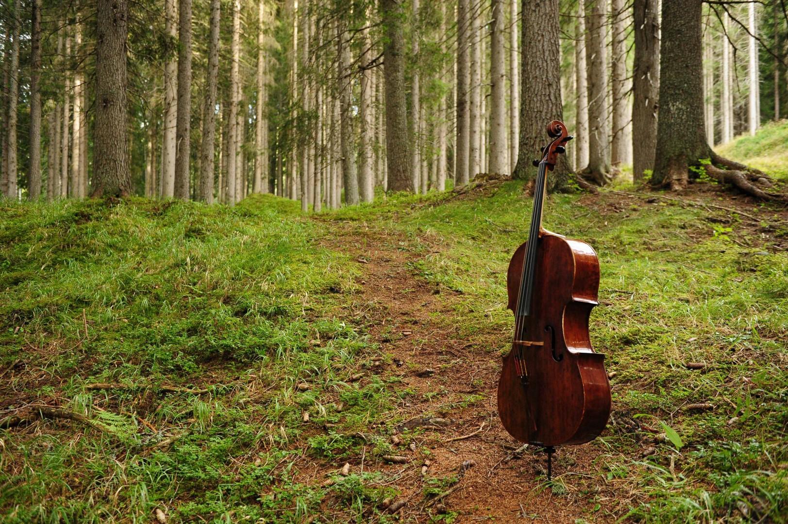 In Val di Fiemme, il  Bosco che suona