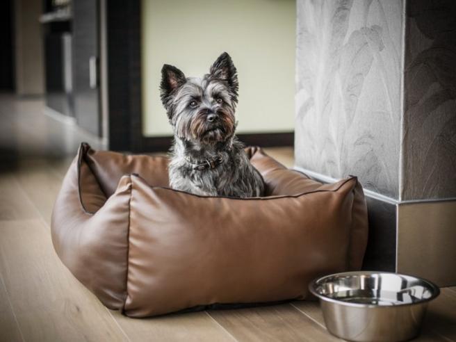 Ecco dieci mete per il turismo pet friendly