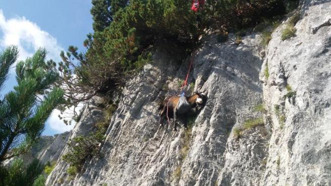 Piemonte, il Soccorso Alpino salva ovini rimasti bloccati su un dirupo a 2000 metri