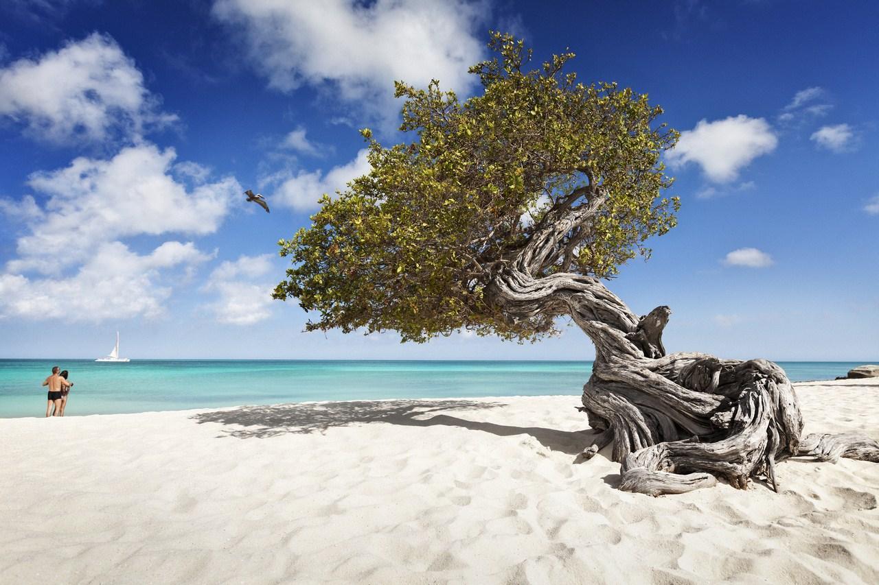 I Caraibi più trendy ad Aruba, una fuga nell Eden