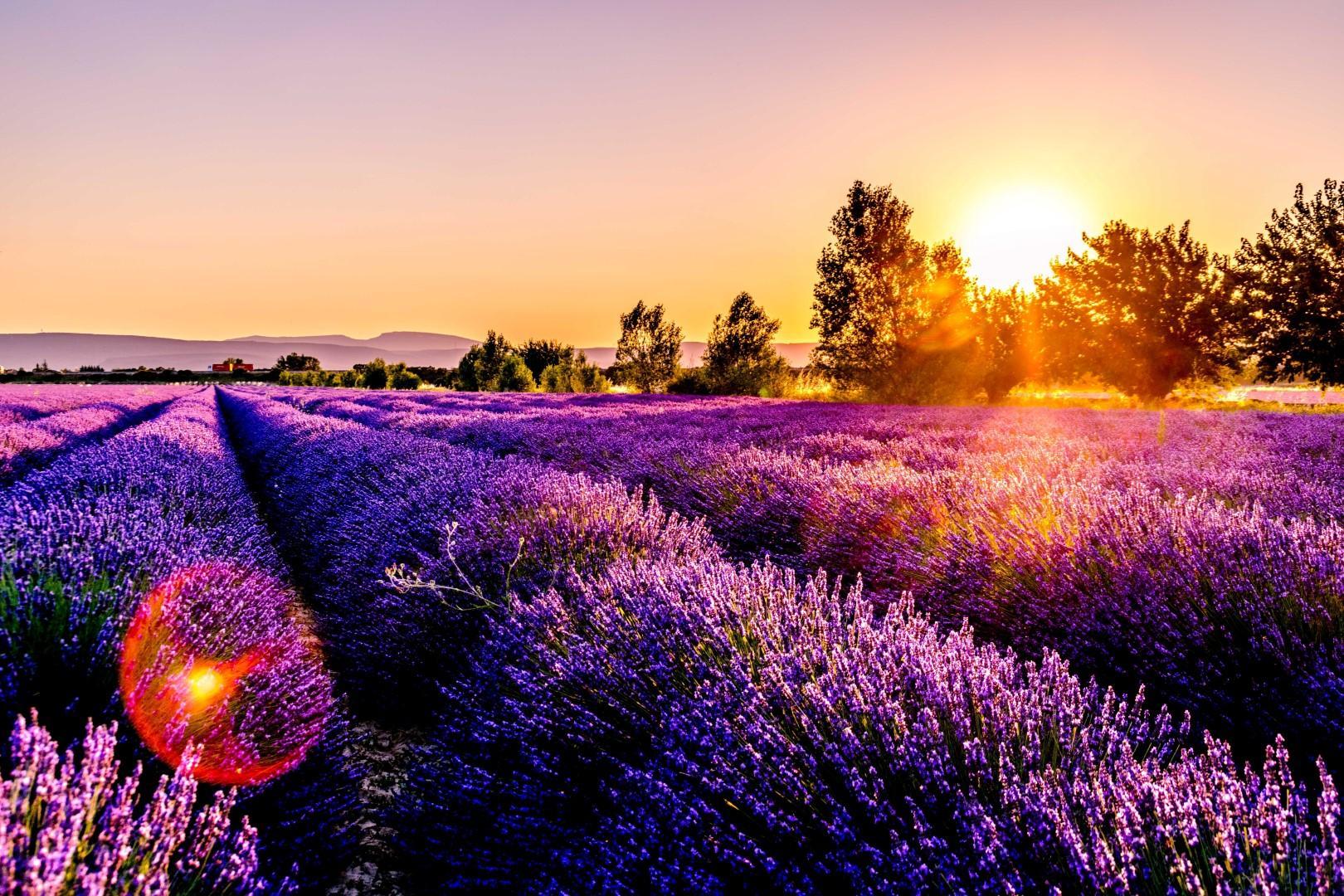 Il fascino enigmatico dell Ultra violet