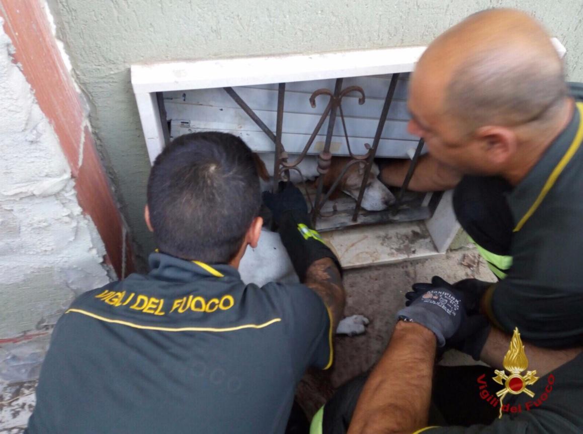 Cagliari, per tutta la notte incastrato in una ringhiera: cane salvato dai vigili del fuoco