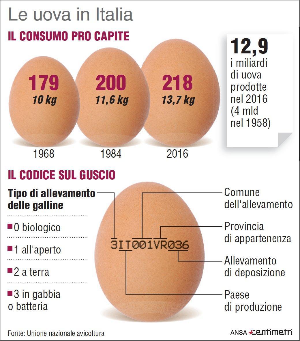 Come leggere l etichetta delle uova