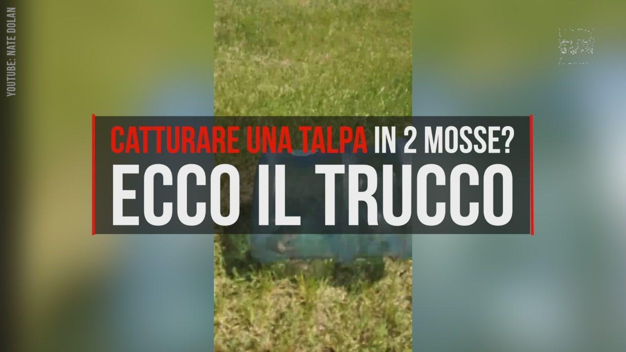 TgCom24   Mediaset