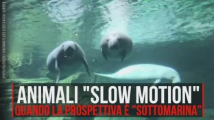 "A tutto relax… animali ""slow motion"