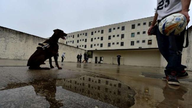 Carcere di Bollate, cani dietro le sbarre per la pet therapy con i detenuti